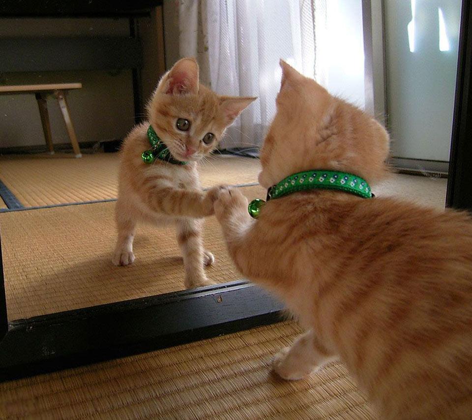 Giocattoli per gatti