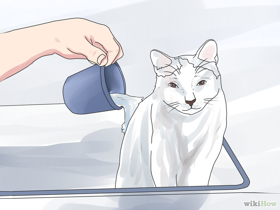Come fare il bagno al gatto pagina 2 di 3 genny la gattara - Fare il bagno al gatto ...