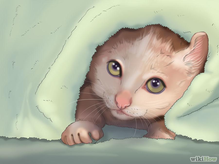 Determinare il sesso del gatto