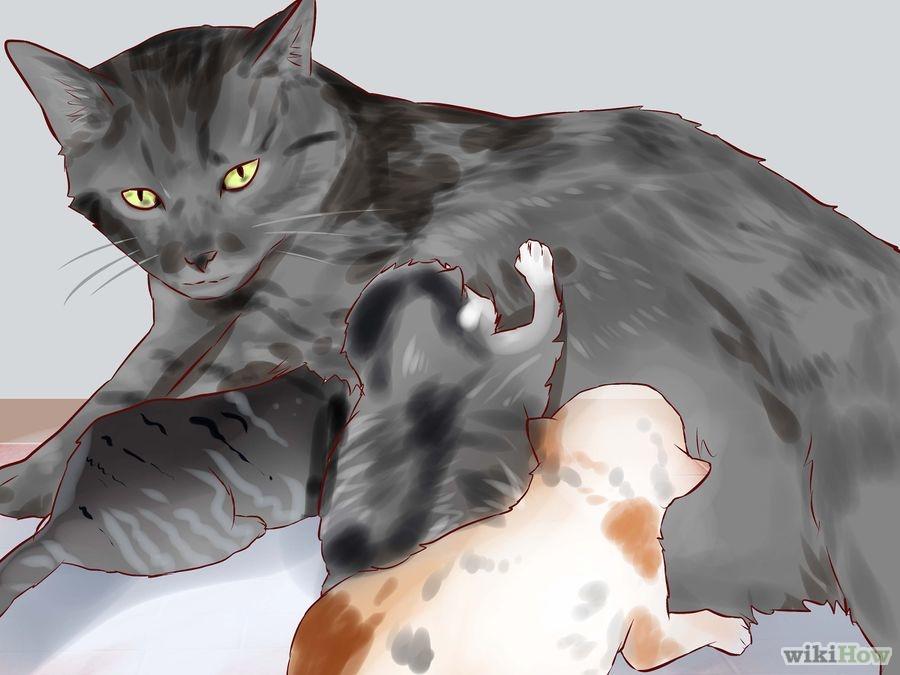 Come allattare un gattino