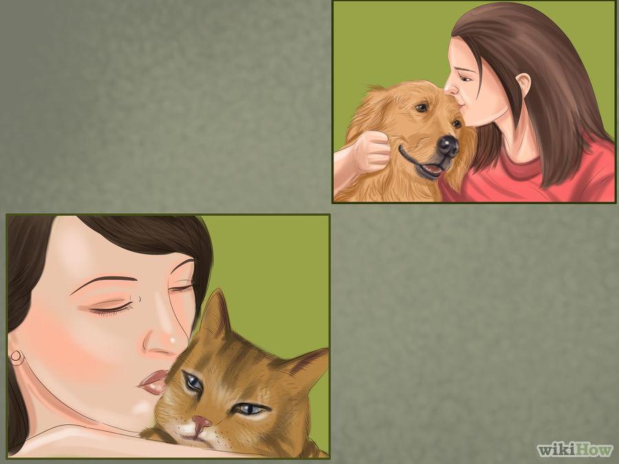 Gatto e cane amici