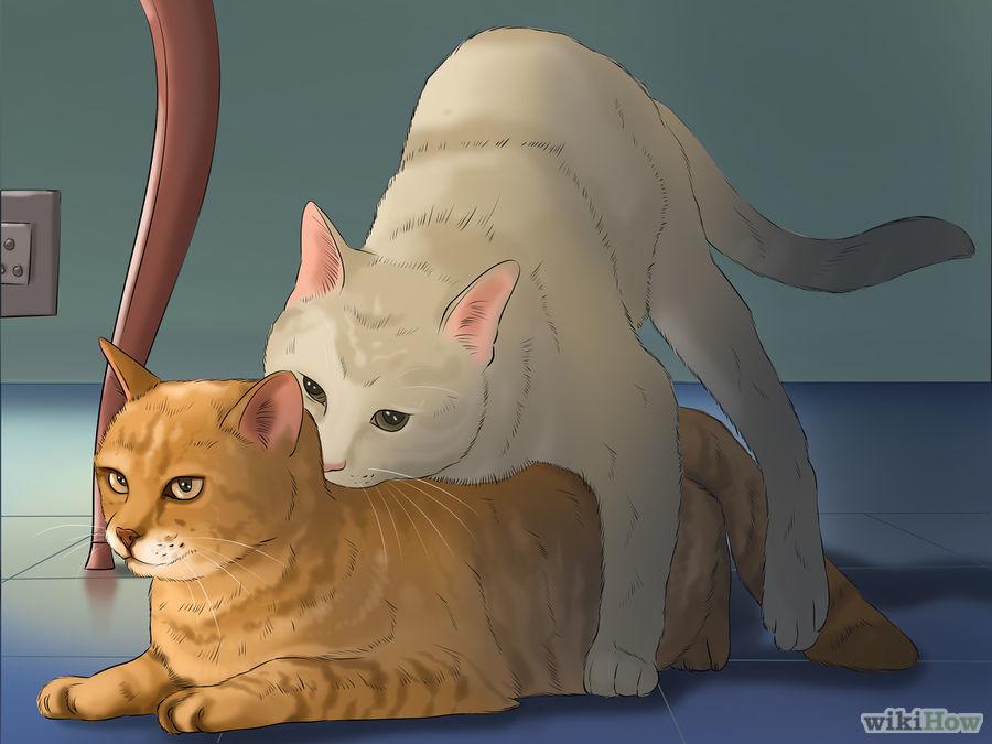 Capire la gatta incinta
