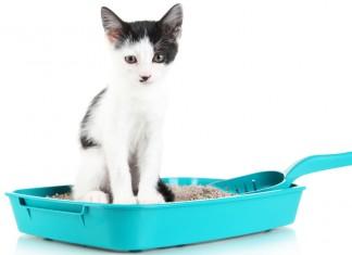 Abituare il gatto alla lettiera