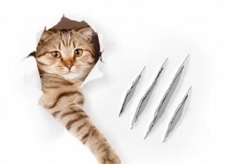 insegnare al gatto a non graffiare