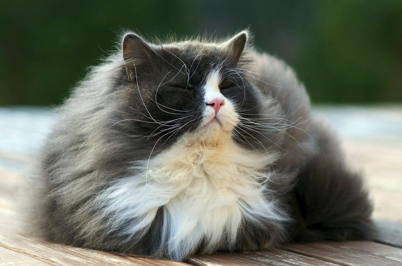 Il pelo del gatto