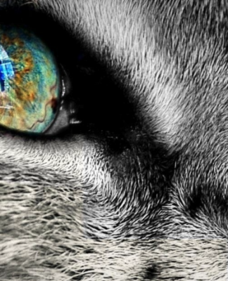 Occhi gatto