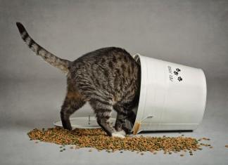 La digestione nel gatto