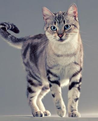 scheletro gatto