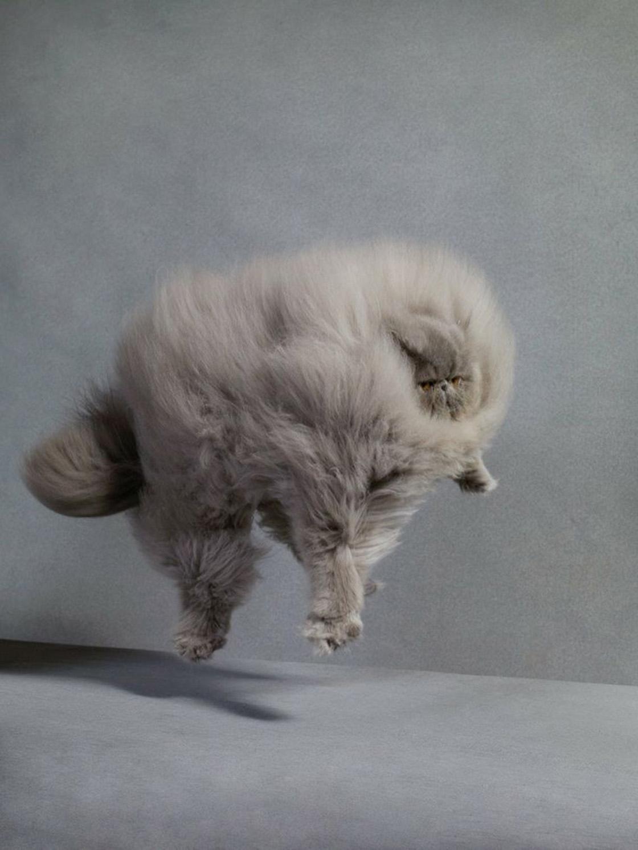 L'equilibrio del gatto