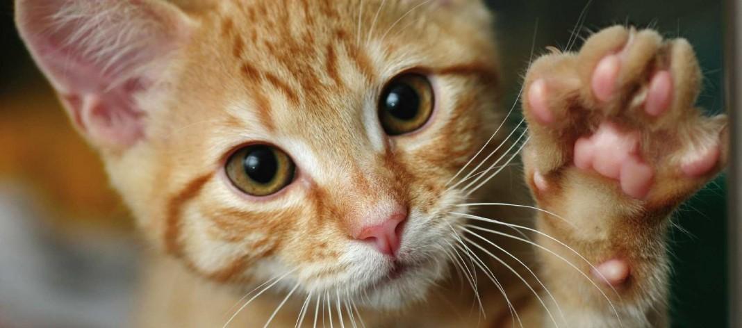 Il gatto e il tatto