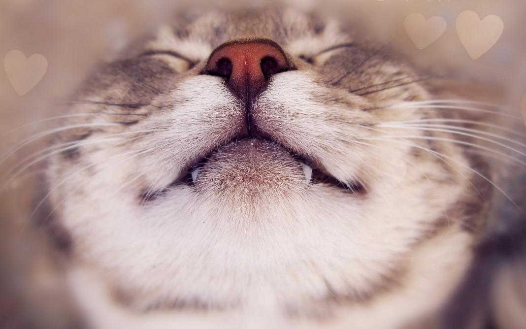 L'olfatto del gatto