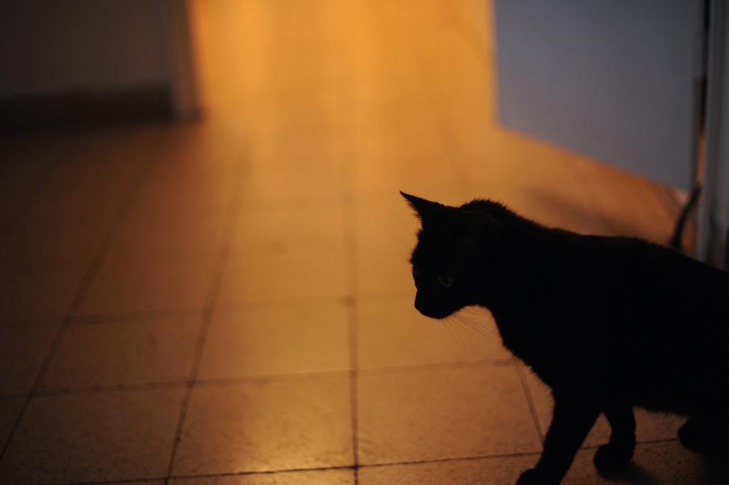 Gatto esplora la stanza dove aver traslocato