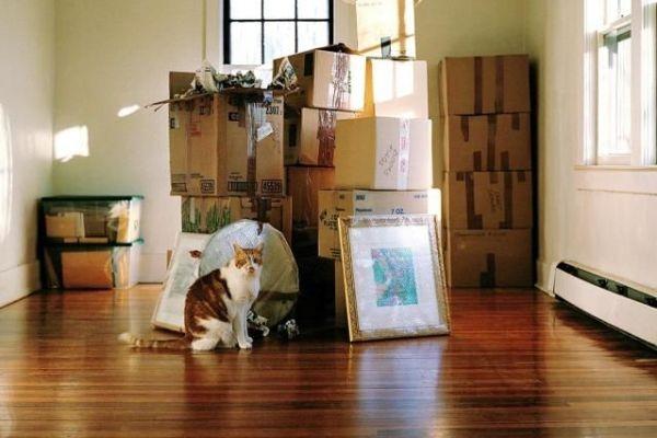 Traslocare con un gatto