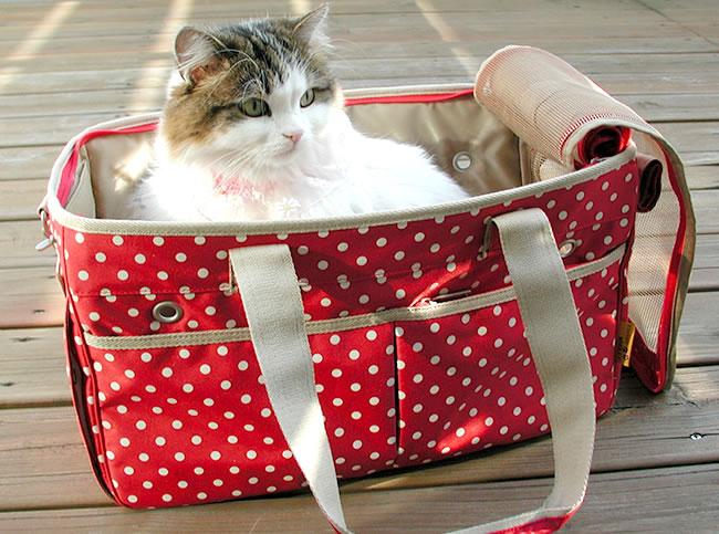 Gatto riposa nel trasportino