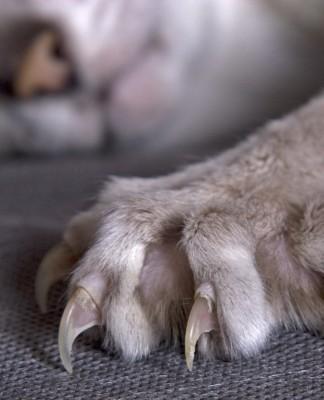 Gli artigli del gatto