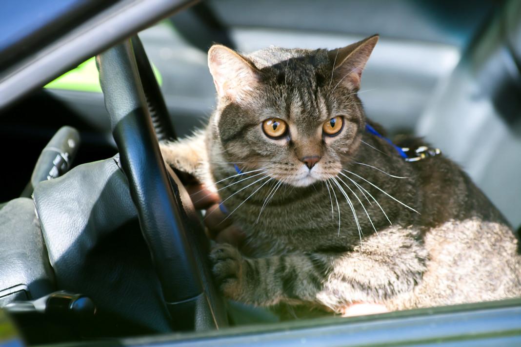 rescue remedy per gatti
