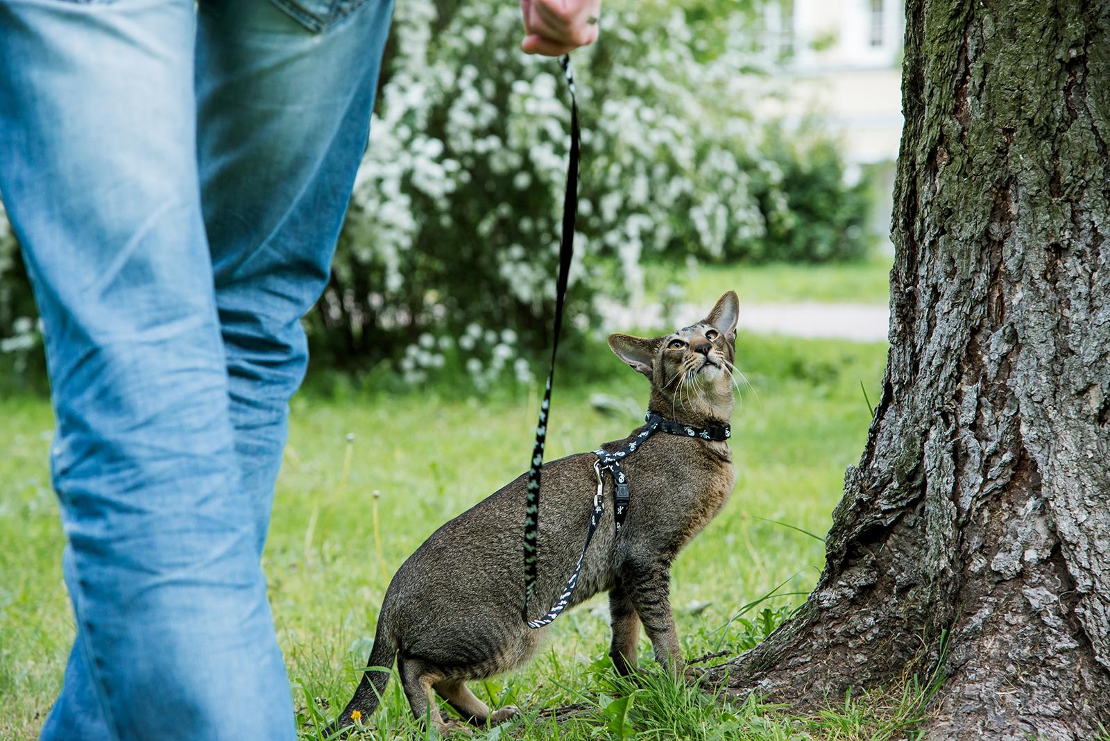 Sgranchirsi le gambe con il gatto