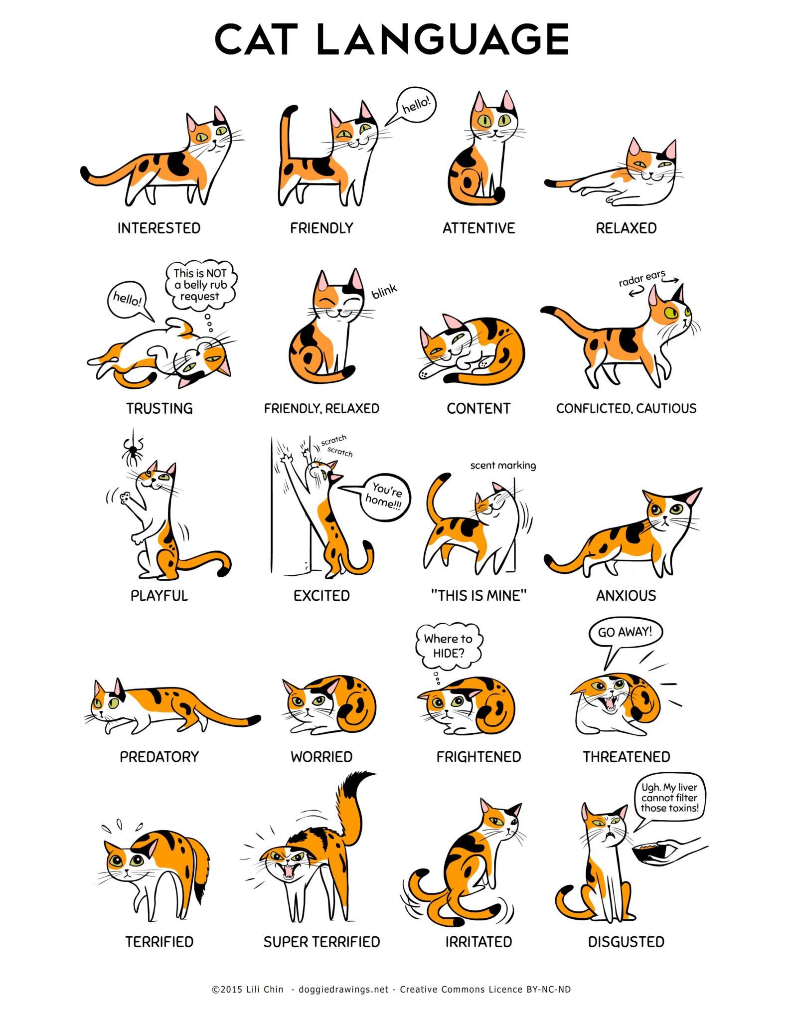 Il linguaggio della coda del gatto