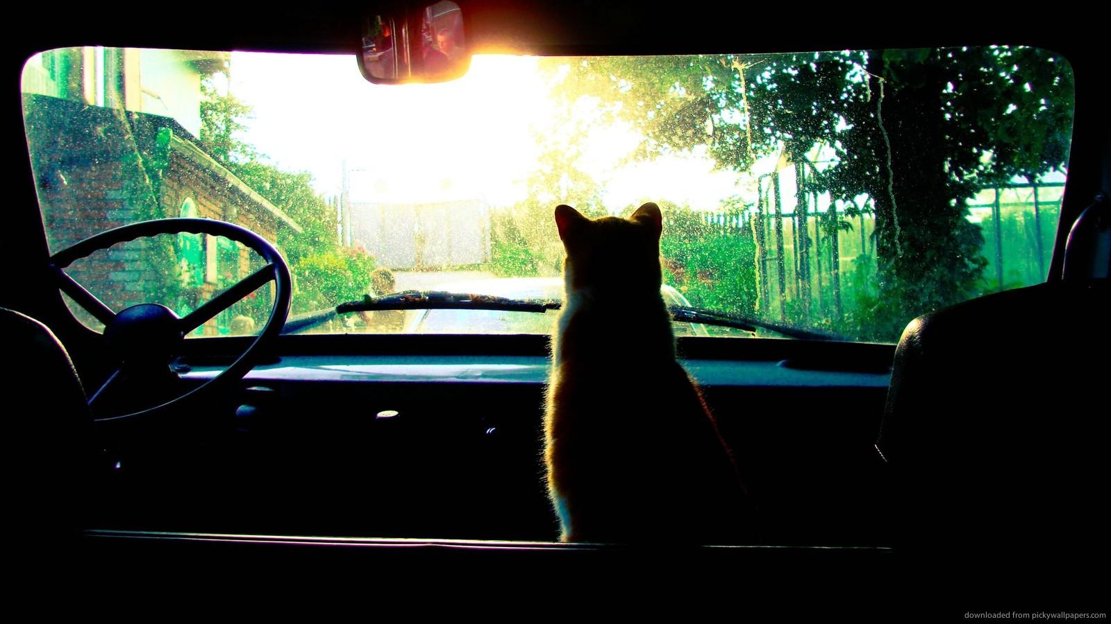 Brevi viaggi in macchina con il gatto