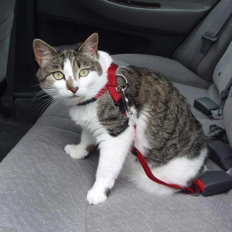 Cintura di sicurezza anche per il gatto