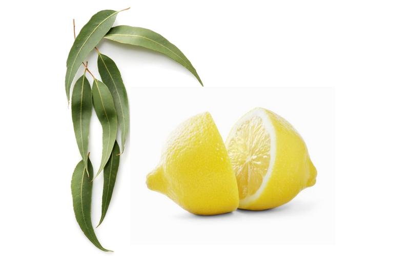Limone e eucalipto