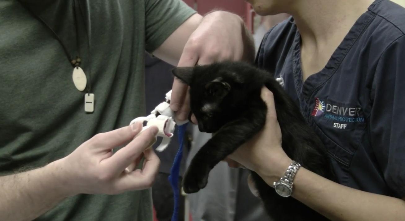 Il gattino Sonic e la sua nuova protesi ortopedica 3D