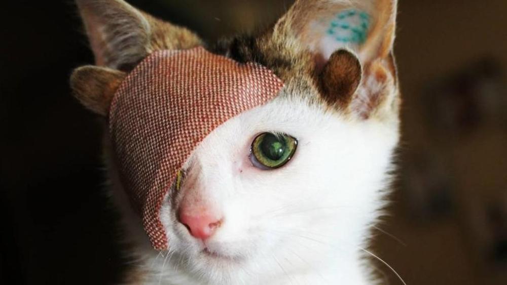 Un gatto con quattro orecchie e un solo occhio viene - Gatto solo in casa per 15 giorni ...