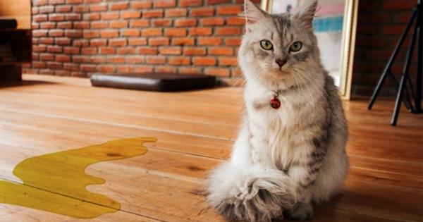 Come eliminare l odore della pip del gatto in casa genny la gattara - Gatto pipi letto ...