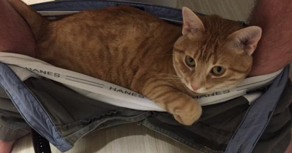 Perch il gatto ci segue in bagno genny la gattara - Fare il bagno al gatto ...