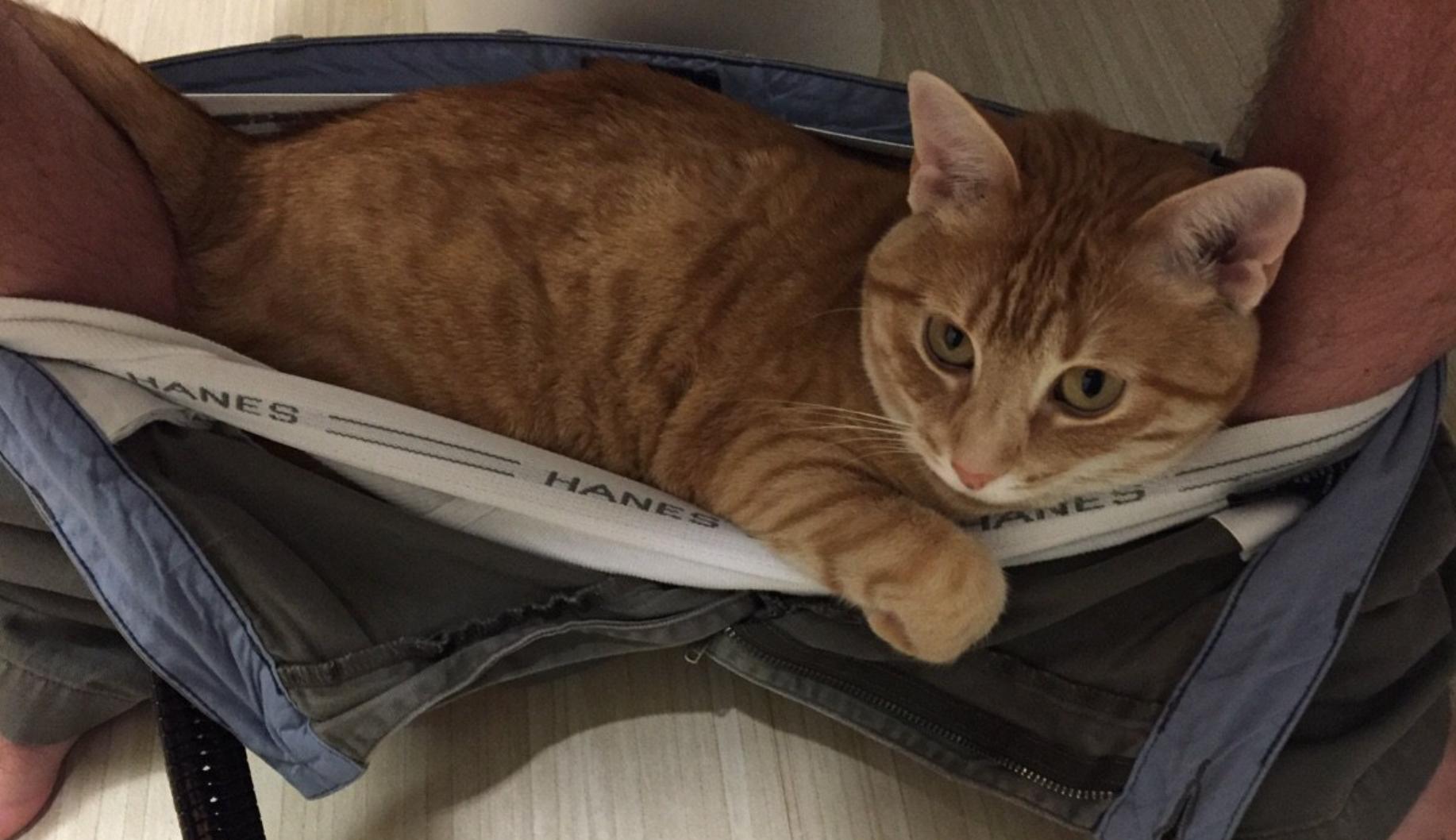perch il gatto ci segue in bagno genny la gattara