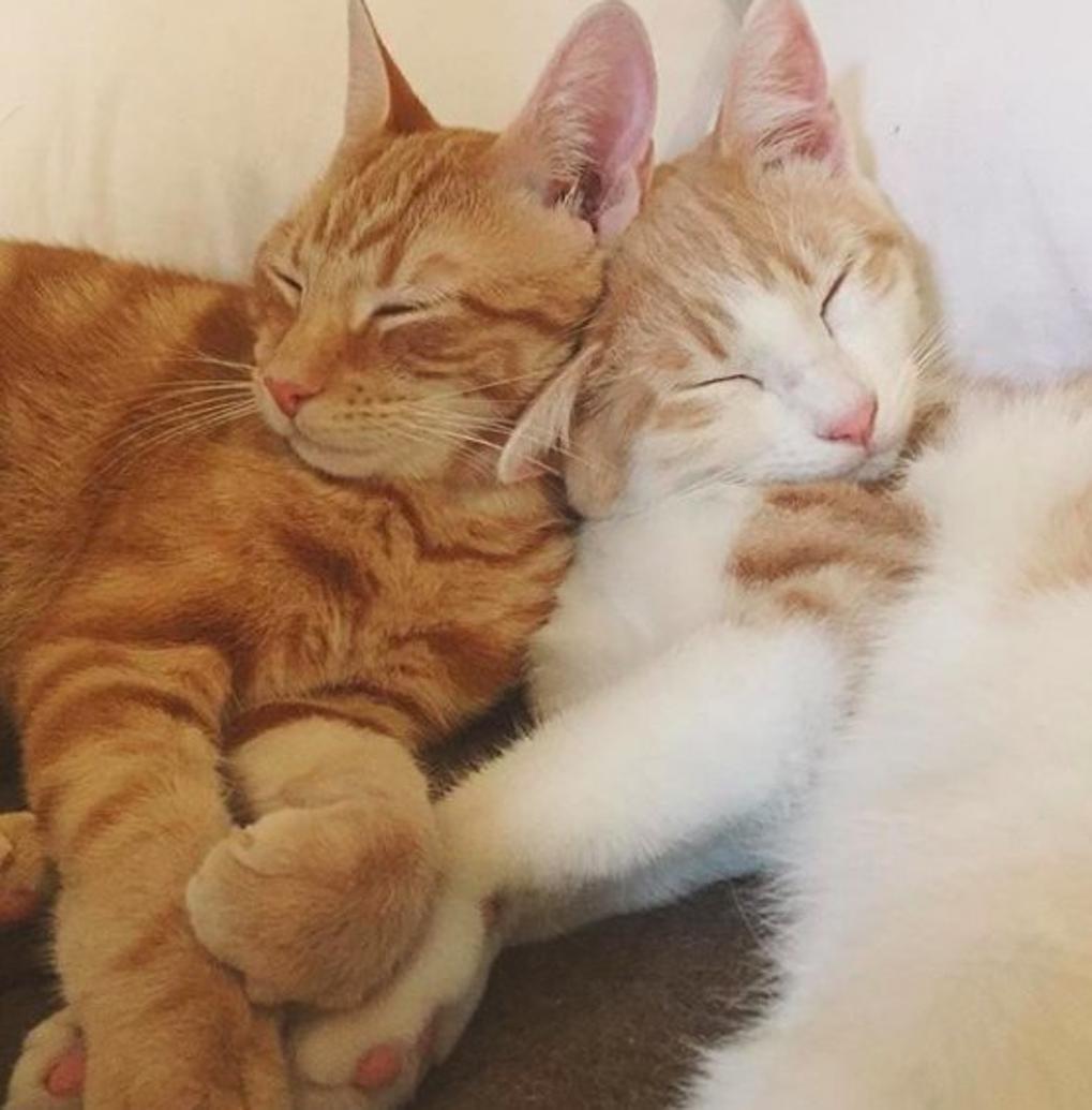 due gatti amano così tanto il distributore automatico