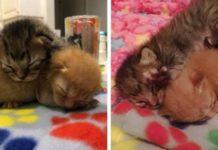 gatti appena nati