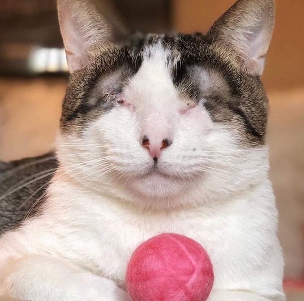 gatto senza occhi
