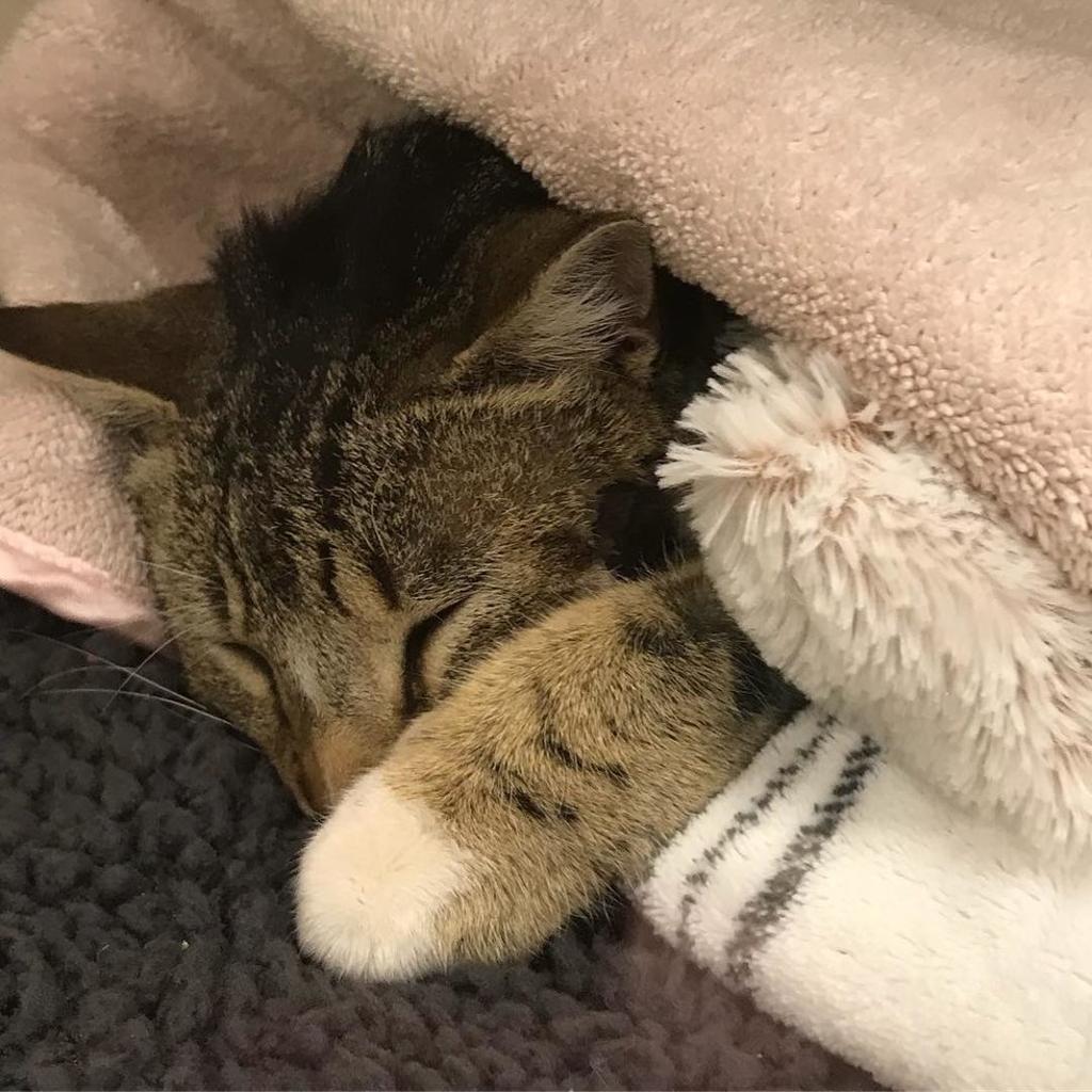 Gatto gravemente ferito torna a camminare