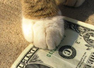 Genny la gattara pagina 5 - La banca piu conveniente per aprire un conto corrente ...