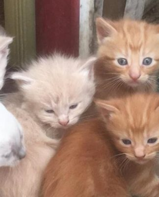 Una ragazza trova un gruppo di gattini nella cuccia del cane