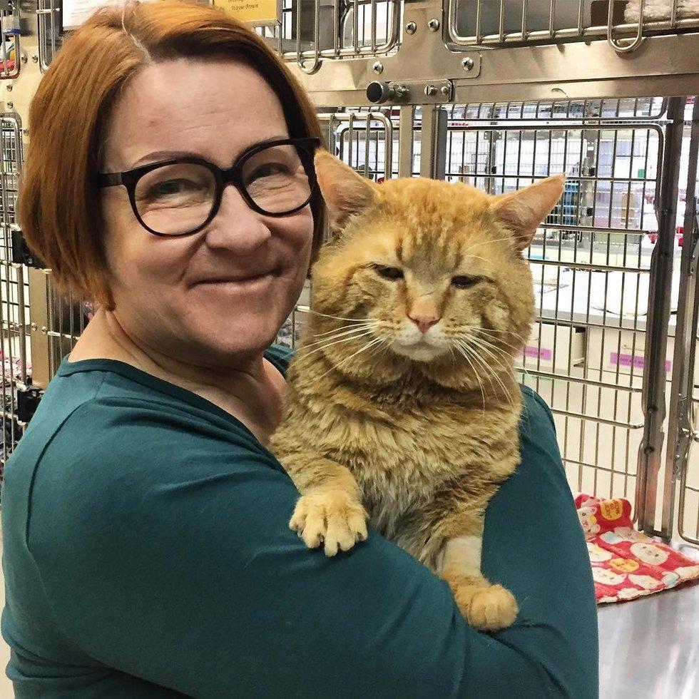 gatto con un miagolio stridulo