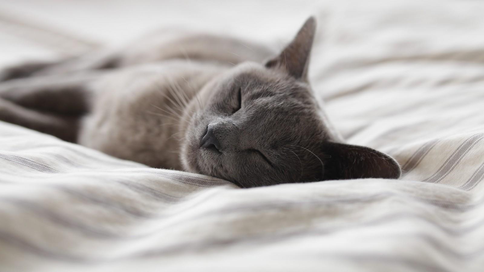 Perch i gatti sono attratti dal lettone genny la gattara - Perche i gatti fanno la pipi sul letto ...