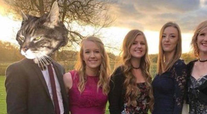 Un gatto prende il posto del fidanzato nelle sue foto di famiglia