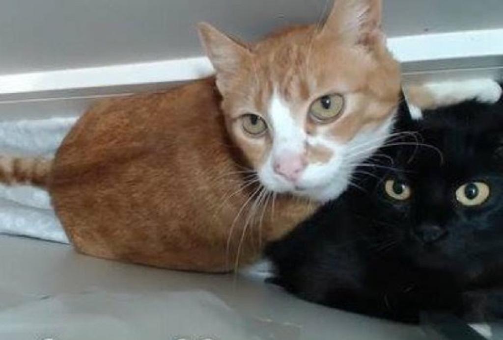 Due gatte randagie si aiutano durante e dopo il parto