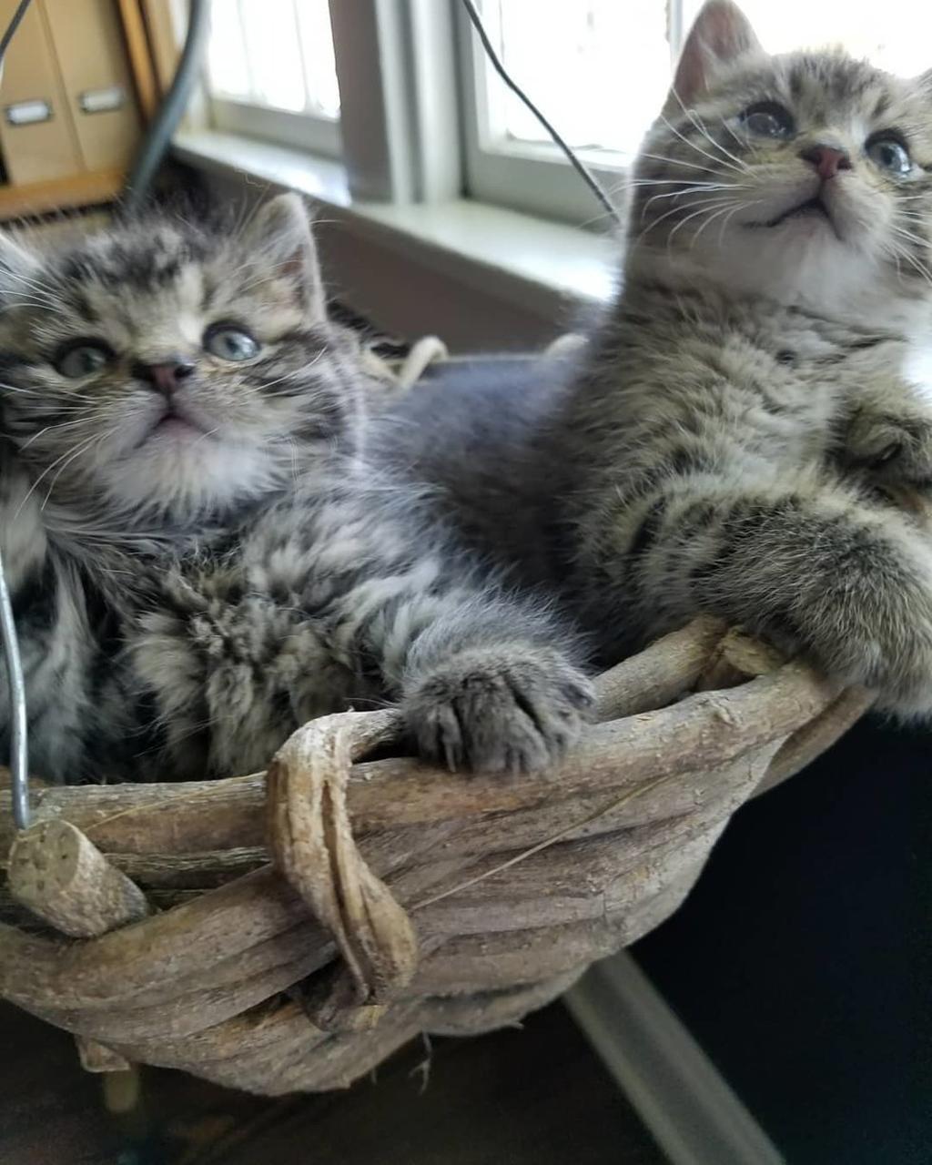 Gattini rimasti orfani