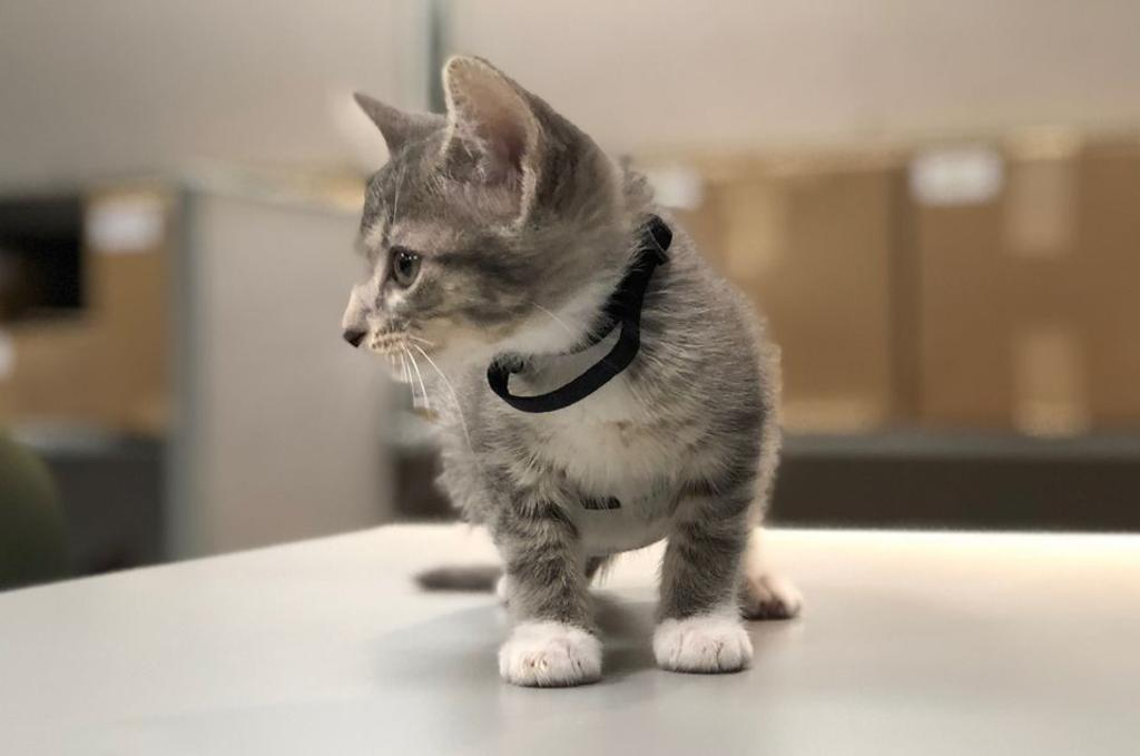 un gatto come nuovo collega