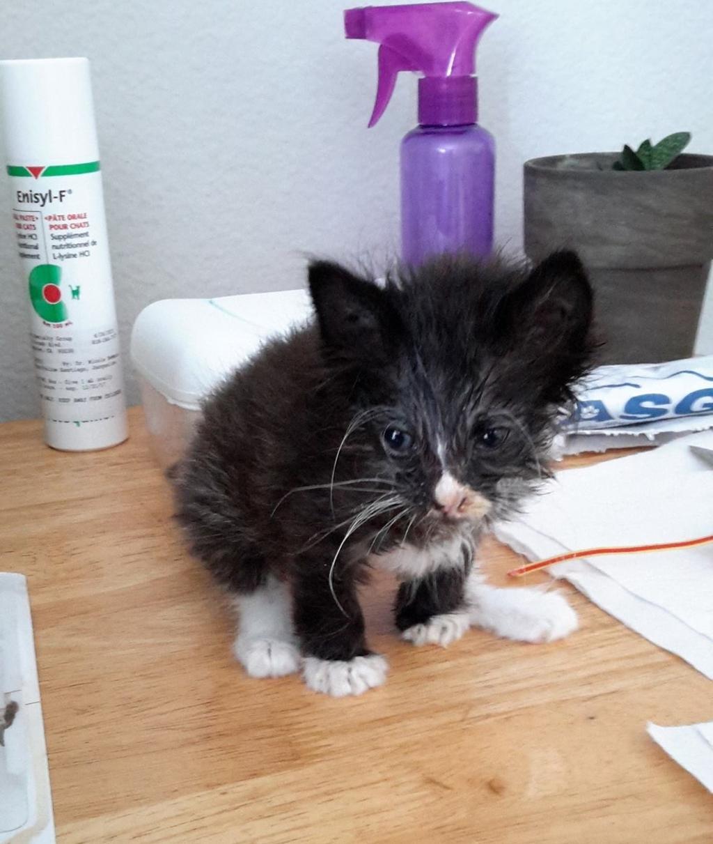 Gatto strappato dalla morte