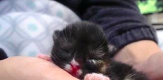 Gatto con buco nel palato