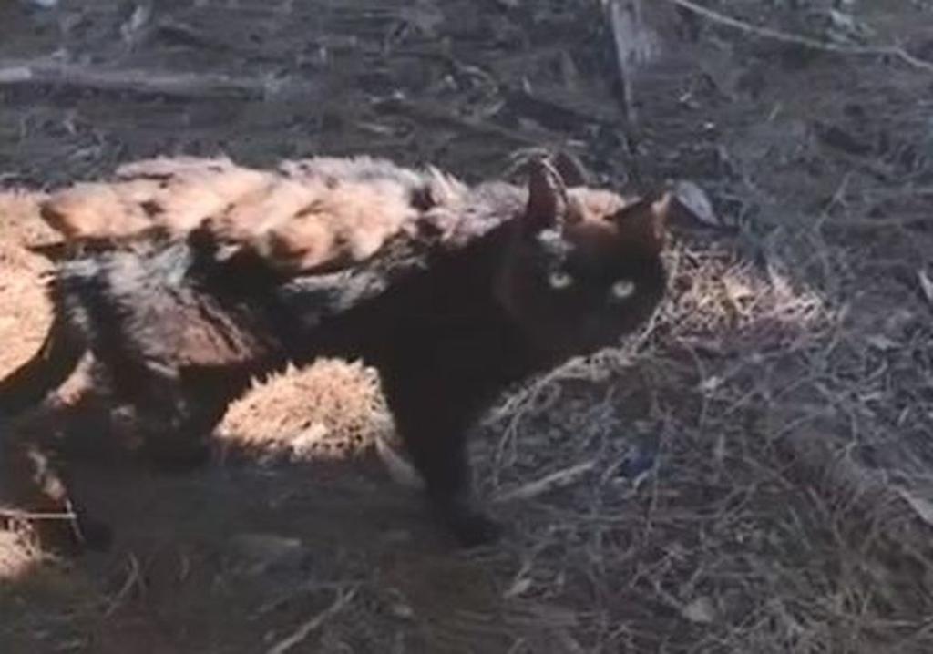 gatto torna a casa dopo 14 anni