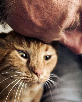 Come far capire al gatto che gli vuoi bene