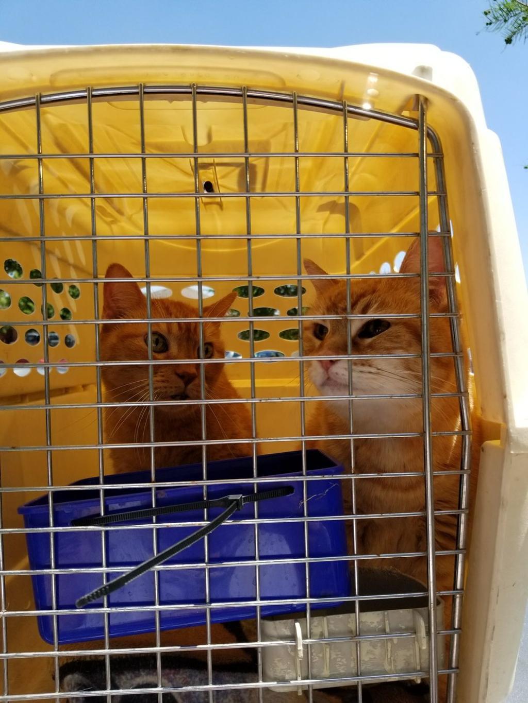 coppia di gatti anziani