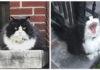 guardiano del quartiere